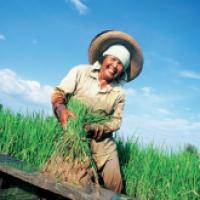 เกษตรไทยหล่อเลี้ยงชีวิต