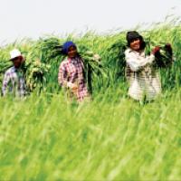 """""""สภาเกษตรกรแห่งชาติ""""-บทบัญญัติคุ้มครองเกษตรกร"""
